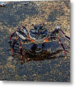 Crab And Reflection Metal Print