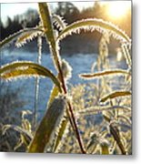 Frost On Willow At Sunrise Metal Print