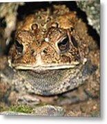 Grumpy Toad Metal Print