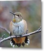 Hummingbird Stretch Six Metal Print