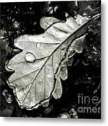 Leaf Metal Print by Odon Czintos