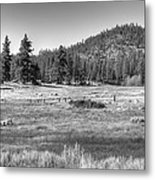 Prairie In South Lake Tahoe Metal Print