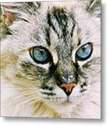 Pretty Blue Eyes--mia Metal Print