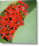 Red Butterfly Buds By Jammer Metal Print