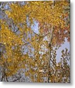 Reflecting Cedar Metal Print