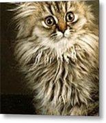 Startled Persian Kitten Metal Print