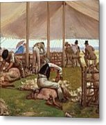 The Sheep Shearing Match Metal Print