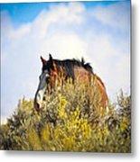 Wild Horse In The Sage Metal Print