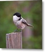 Willow Tit With Seeds Metal Print