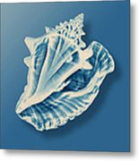 X-ray Of A Conch Shell Metal Print
