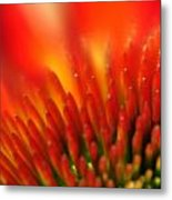 0001 Echinacea Pow Wow Sunrise Metal Print