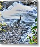 0005 Blue Heron At Glen Falls Williamsville Ny Metal Print