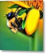 001 Sleeping Bee Metal Print