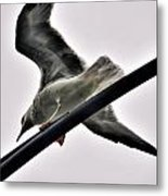 002 Gull To Out Do Wallenda Metal Print