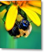 003 Sleeping Bee Series Metal Print
