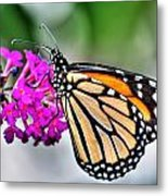 004 Making Things New Via The Butterfly Series Metal Print