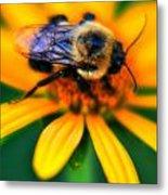 006 Sleeping Bee Series Metal Print
