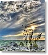 008 In Harmony With Nature Series Metal Print