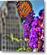 008 Making Things New Via The Butterfly Series Metal Print