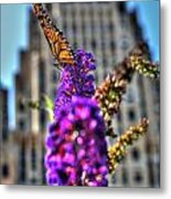 009 Making Things New Via The Butterfly Series Metal Print
