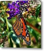 011 Making Things New Via The Butterfly Series Metal Print