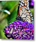 012 Making Things New Via The Butterfly Series Metal Print