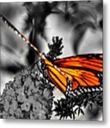 014 Making Things New Via The Butterfly Series Metal Print