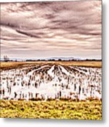 0704-8703 Winter Clouds At Holla Bend Wildlife Refuge Metal Print