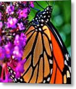 007 Making Things New Via The Butterfly Series Metal Print
