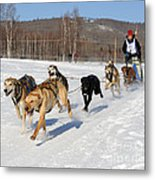 2010 Limited North American Sled Dog Race Metal Print