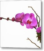 A Close-up Of An Orchid Branch Metal Print