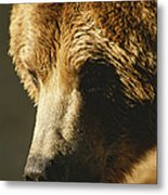 A Close View Of The Face Of A Grizzly Metal Print