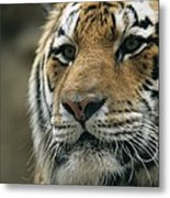 A Close View Of The Face Of Khuntami Metal Print