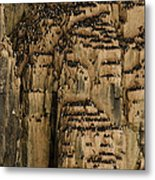 A Colony Of Little Auks Line Jagged Metal Print
