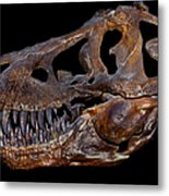 A Genuine Fossilized Skull Of A T. Rex Metal Print