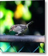 A Little Birdie Told Me Metal Print