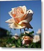 A Texas Rose Metal Print