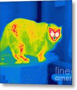 A Thermogram Of A Long Haired Cat Metal Print