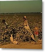 African Americans Picking Cotton Metal Print