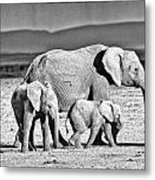 African Elephant In The Masai Mara Metal Print
