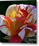 All American Magic Rose Metal Print