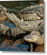 Alligator Pool Party Metal Print