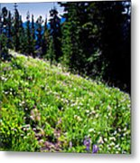 Alpine Meadow Vii At Mount Rainier Metal Print
