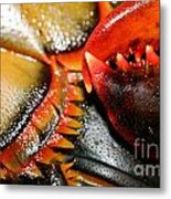 American Lobsters Metal Print