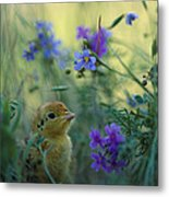 An Attwaters Prairie Chick Surrounded Metal Print