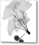 An X-ray Of Ginko Leaves Metal Print