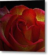 Annaversary Rose I  Metal Print