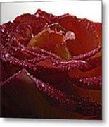 Annaversary Rose II Metal Print