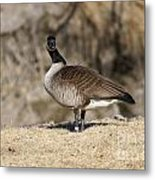 Are You Looking At Me Metal Print