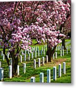 Arlington Cherry Trees Metal Print